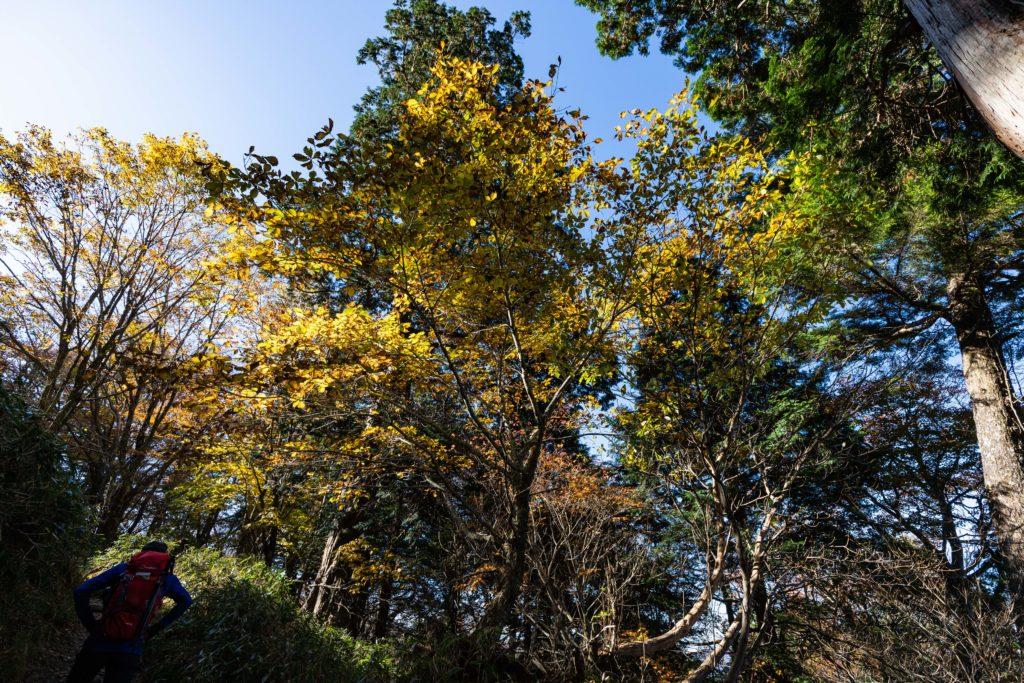 剣山の紅葉